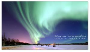 Anchorage, Alaska Zoom Background 5