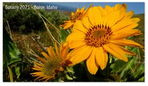 Boise, Idaho Zoom Background 3