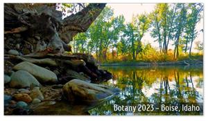 Boise, Idaho Zoom Background 4
